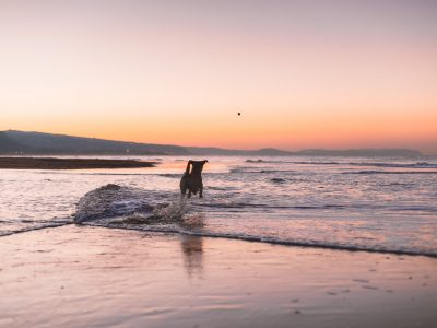 Dog Friendly Beaches in Wales